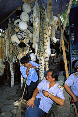 Snow Leopard (Uncia uncia) pelts sold in market with police and shopkeeper in stall, Kashgar, Xinjiang, China  -  Colin Monteath/ Hedgehog House