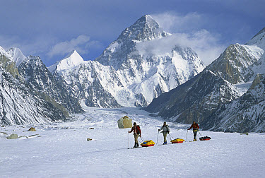 Three skiers pull sleds on Baltoro Glacier with K2 behind, at 8,611 metes elevation it is the second highest peak in the world, Karakoram Mountains, Pakistan  -  Colin Monteath/ Hedgehog House