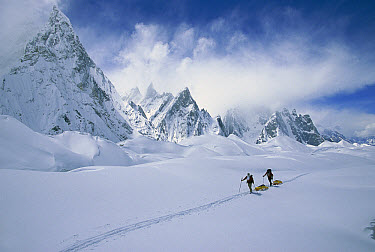 Two skiers pulling sleds under Mitre Peak, Godwin Austen Glacier, Karakoram Mountains, Pakistan  -  Colin Monteath/ Hedgehog House