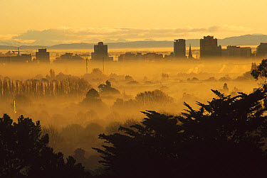 Winter smog over the city of Christchurch caused by an inversion layer and pollution from cars and fires, seen through trees from Port Hills, South Island, New Zealand  -  Colin Monteath/ Hedgehog House