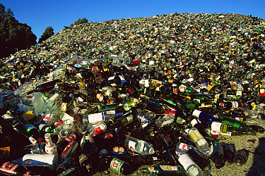 Broken glass to be recycled, Christchurch, New Zealand  -  Colin Monteath/ Hedgehog House