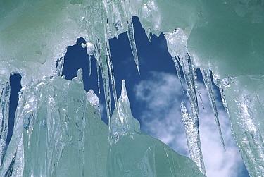 Crevasse icicles at 6,000 meters elevation on the west ridge of Chongtar, Karakoram, China  -  Colin Monteath/ Hedgehog House