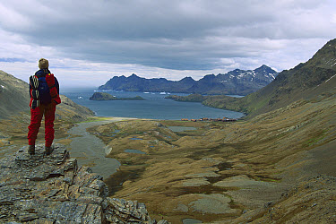 Tourist standing on the Fortuna Saddle views the derelict Norwegian Stromness whaling station, South Georgia Island  -  Colin Monteath/ Hedgehog House