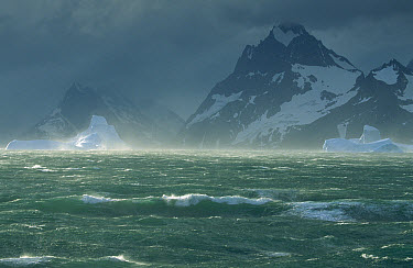 Wind storm on icebergs caused by katabatic wind off of the mountains, Drygalski Fjord, South Georgia Island  -  Colin Monteath/ Hedgehog House
