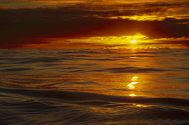Sunset over the calm Southern Ocean through Drake Passage en route to Cape Horn, Antarctica  -  Colin Monteath/ Hedgehog House