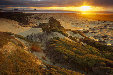 Sunset from sand dunes above Mason Bay Beach, Rakiura National Park, Stewart Island, New Zealand  -  Colin Monteath/ Hedgehog House