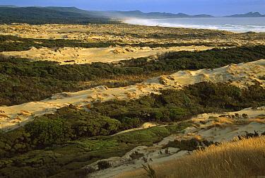 Mason Bay sand dunes, Rakiura National Park, Stewart Island, New Zealand  -  Colin Monteath/ Hedgehog House