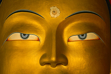 Maitreya, close up of statue head, Buddha, Tikse monastery, Ladakh, India, Himalayas  -  Colin Monteath/ Hedgehog House