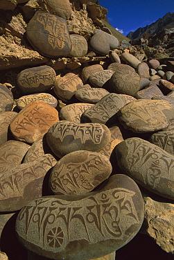 Carved Buddhist mani stones below ruined palace, Zangla, Kingdom of Zanskar, northwest India  -  Colin Monteath/ Hedgehog House
