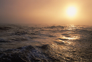 Sun shining through fog on a calm Drake Passage, Antarctica  -  Colin Monteath/ Hedgehog House