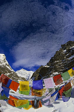 Prayer flags on Gotcha la Kangchenjunga, Talung face (8595 meters) in the background, most easterly of the world's fourteen 8000 metre peaks, Sikkim Himalaya, India  -  Colin Monteath/ Hedgehog House