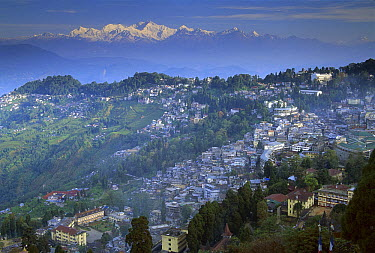 Kangchenjunga at dawn, from below St. Paul's School, view of Darjeeling, most easterly of the world's fourteen 8000 metre peaks, Sikkim Himalaya, India  -  Colin Monteath/ Hedgehog House