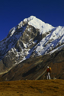 Pandim Peak, a 6697 meter tall peak, viewed from Dzong Ri, Sikkim Himalaya, India  -  Colin Monteath/ Hedgehog House