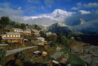 Ghangdrung village with Annapurna South, at 7219 metres, covered in fresh winter snow, Annapurna Conservation Area, Nepal  -  Colin Monteath/ Hedgehog House