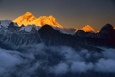 Mount Everest, Lhotse and Makalu in the evening, seen from Gokyo Ri, Khumbu, Nepal  -  Colin Monteath/ Hedgehog House