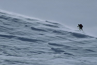 Skiing hiker in the wind, Southern Alps, New Zealand  -  Nick Groves/ Hedgehog House