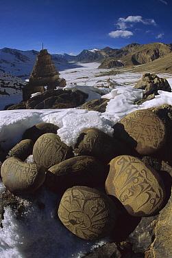 Carved Buddhist mani stones in Zangla, capital of ancient kingdom, Kingdom of Zanskar, Himalaya, India  -  Colin Monteath/ Hedgehog House