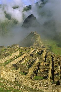 Ruins of Machu Picchu, 9000 feet up in tropical rainforest, Peru  -  Shaun Barnett/ Hedgehog House