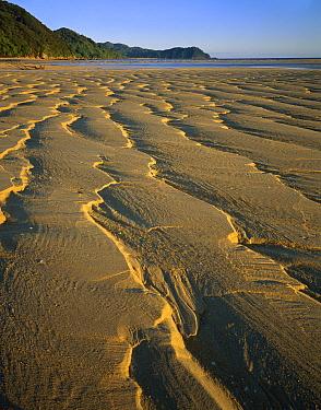 Sand patterns on beach, Abel Tasman National Park, New Zealand  -  Rob Brown/ Hedgehog House