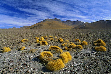 Arid landscape of the Altiplano, Bolivia  -  Grant Dixon/ Hedgehog House