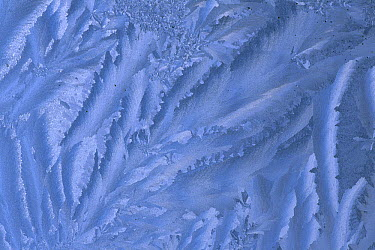 Ice and frost patterns on window  -  Grant Dixon/ Hedgehog House