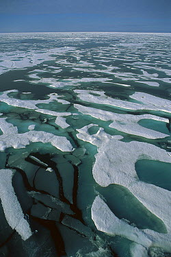 Solid pack ice and surface melt water, Arctic Ocean  -  Colin Monteath/ Hedgehog House