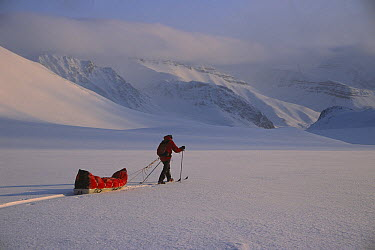 Person skiing across snow from Ny Alesund to Longyearbyen, Spitsbergen, Svalbard, Norway  -  Colin Monteath/ Hedgehog House
