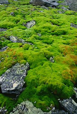 Moss bed detail, Antarctica  -  Colin Monteath/ Hedgehog House