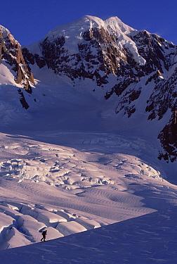 Skiier, Mount Tasman, Westland National Park, New Zealand  -  Nick Groves/ Hedgehog House