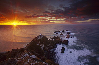 Nugget Point lighthouse at sunrise, South Island, New Zealand  -  Colin Monteath/ Hedgehog House