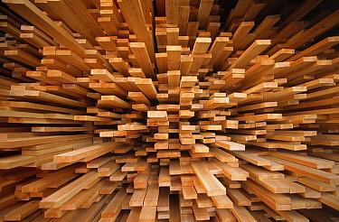 Milled wood planks in a stack, Europe  -  Flip de Nooyer