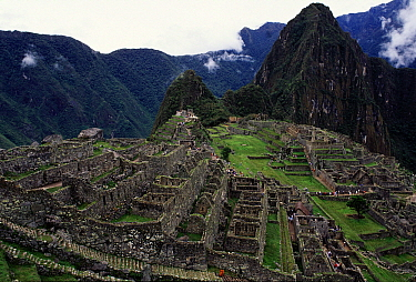 Tourists visiting the ruins of Machu Picchu, 9000 feet up in tropical rainforest, Peru  -  Jan Vermeer