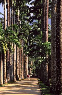 People walking along palm-lined path in botanical garden, Rio de Janeiro, Brazil  -  Wil Meinderts/ Buiten-beeld