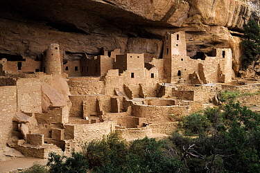 Pueblo or Anasazi Indian cliff dwellings built around 1200 AD, Cliff Palace, Mesa Verde National Park, Colorado  -  Wil Meinderts/ Buiten-beeld