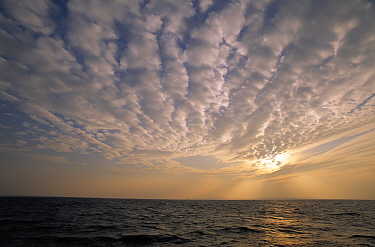 Altocumulus clouds over the ocean at sunset  -  Wil Meinderts/ Buiten-beeld