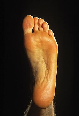 Human (Homo sapien) foot underside  -  Ingo Arndt