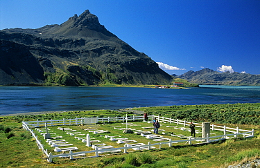 Tourists viewing cemetery at Grytviken, an abandoned whaling station, South Georgia Island  -  Flip de Nooyer