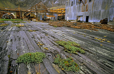 Machinery and buildings at abandoned whaling station, Grytviken, South Georgia  -  Flip de Nooyer