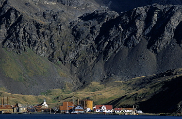 Houses and church at abandoned whaling station, Grytviken, South Georgia  -  Flip de Nooyer