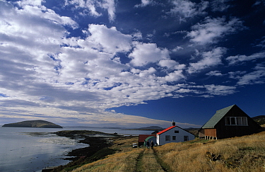 Cabins and dirt road overlooking bay, New Island, West Falkland  -  Flip de Nooyer