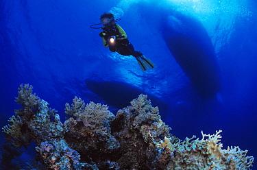 Scuba diver investigating the underwater world, Red Sea, Egypt  -  Hans Leijnse/ NiS