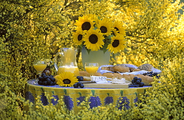 Still-life of sunflowers in vase, fruit, bread, and lemonade  -  Jan Vermeer