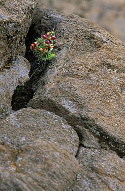 New growth on lava, Big Island, Hawaii  -  Winfried Wisniewski
