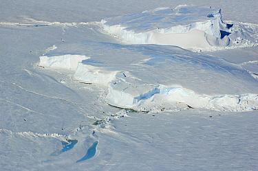 Icefield with Emperor Penguins (Aptenodytes forsteri), Riiser-Larsen Ice Shelf, Antarctica  -  Jan Vermeer