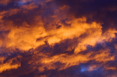 Moor at sunrise, Goldenstedt, Germany  -  Willi Rolfes/ NIS
