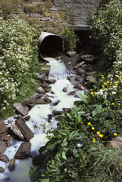 Polluted water flowing out of pipe, Orkney Island, Scotland  -  Peter Reynolds/ FLPA