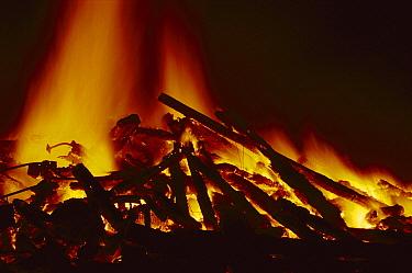 Burning timber, England  -  Catherine Mullen/ FLPA