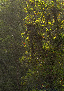 Rain in the rainforest, Costa Rica  -  Piotr Naskrecki