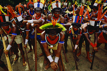 Caiapo Indian group in traditional ceremonial costume, south Amazon ecosystem, Brazil  -  Claus Meyer