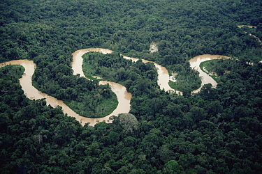 Meandering river in forest, Amazon, Brazil
